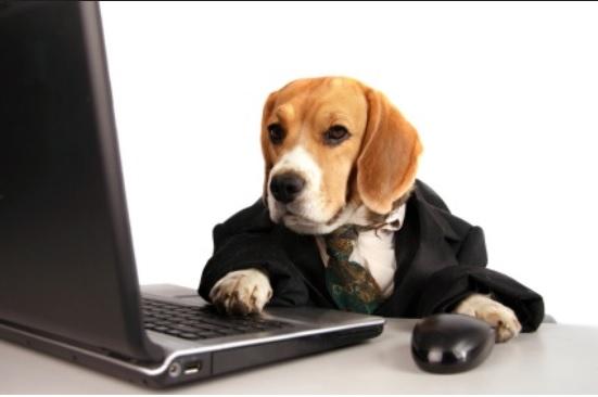 dog writing